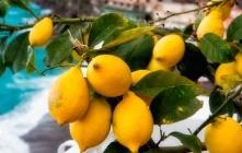 Lemon tour: un'affascinante passeggiata tra profumi e degustazioni